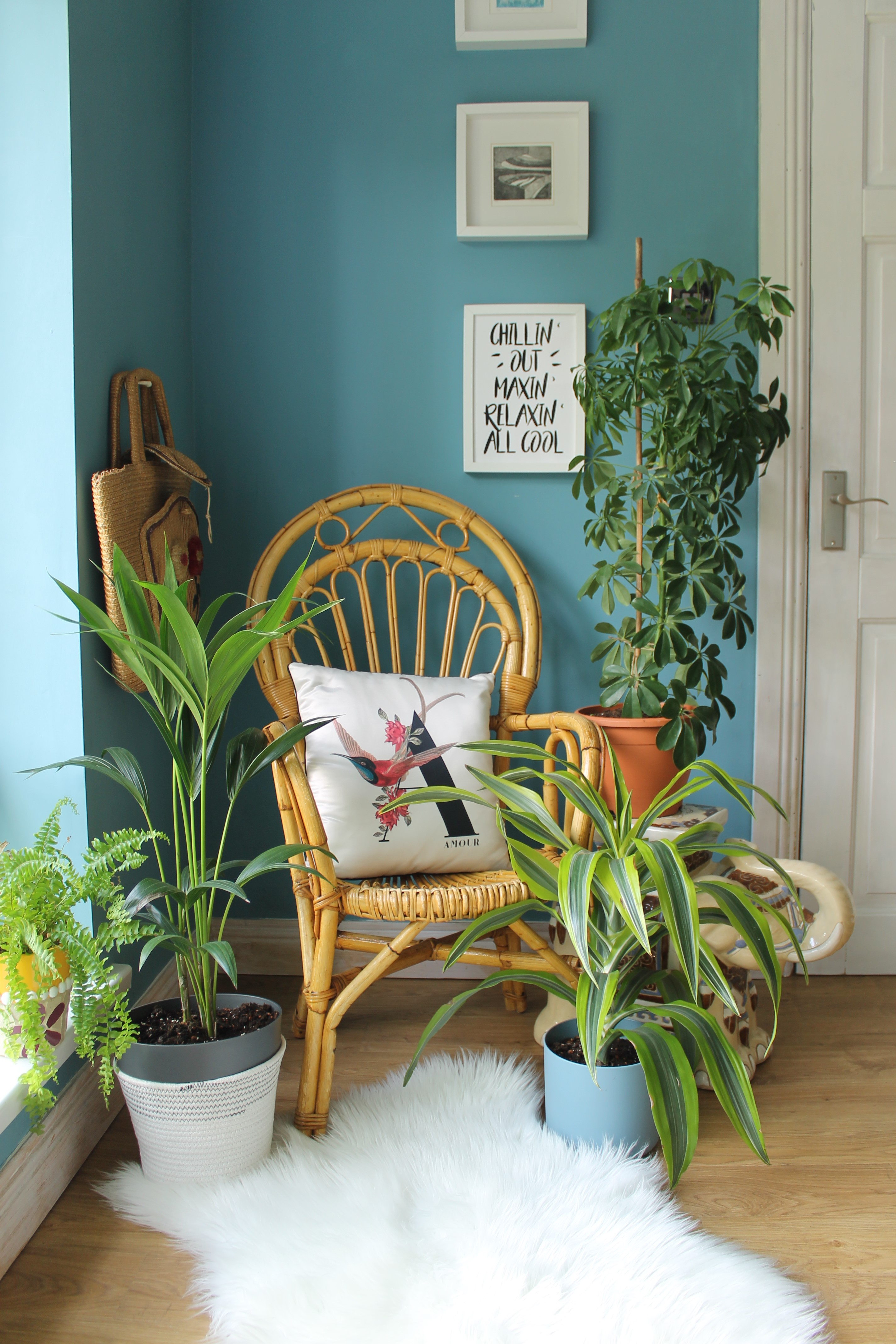 5 reasons to bring houseplants home